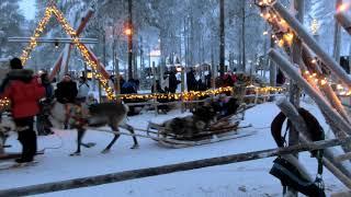 フィンランドのサンタクロース村でトナカイそり体験トナカイそり体験で...