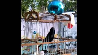 Aves de Venezuela