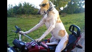 Собака едет на мопеде, смотреть всем!!!!