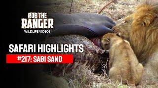 Idube Safari Highlights #217: 09 - 11 July 2013 (Latest Sightings) #youtubeZA