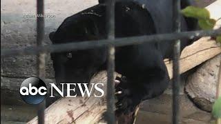 Jaguar attacks woman at Arizona zoo thumbnail