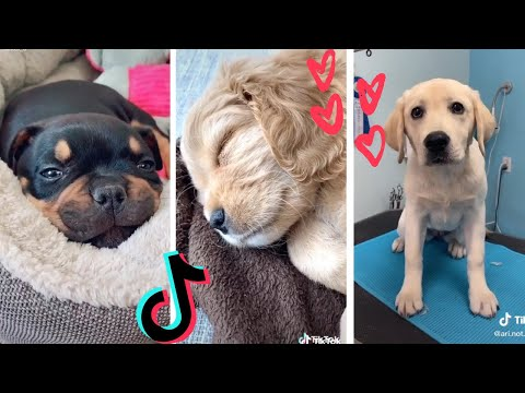 Dogs... being DOGS! Funny Doggos of TikTok ~ Cutest Puppies TIK TOK ~ Fluppy