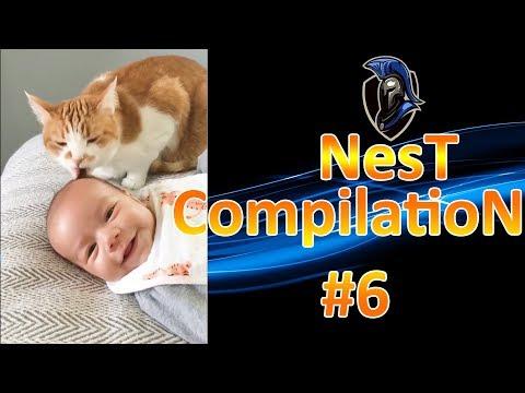 NesT CompilatioN #6 - Babies vs. Cats #2