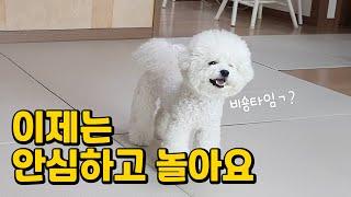 강아지매트 11개월 사용해본 후기 (디팡매트 받아갈 사…