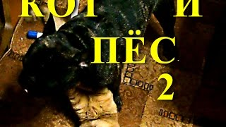 Рыжый кот и Гарик Бульдог Харламов играют 2...