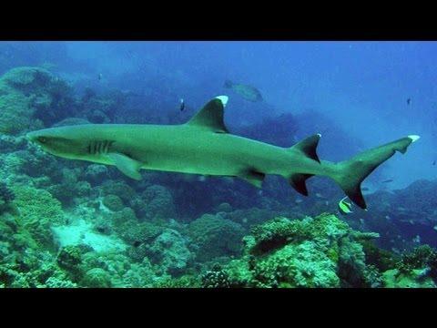 Snorkeling Anini Beach   Kauai