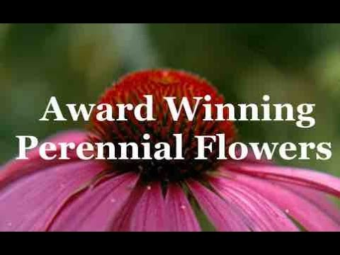 Award winning perennial flowers youtube award winning perennial flowers mightylinksfo