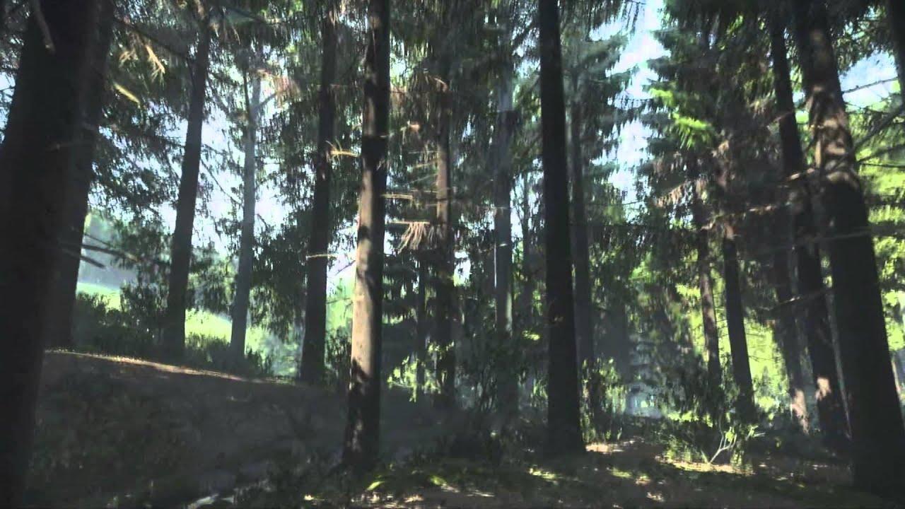 Wood Wallpaper Hd 「pc」 Kingdom Come Deliverance Samop E Forest Alpha