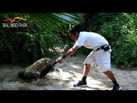 Komodo Experience - Bali Bird Park