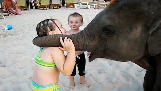 Funny Animal And Baby At The Zoo 🤣😛 Too Cute Babies & Animals