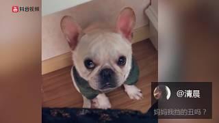 【抖音】萌了我一脸。2018最新动物视频合集 (11)动物成精系列 TIK TOK Douyin 萌宠 超级可爱 搞笑