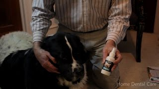 Home Dental Care For Your Pets | Doc Jan Hale | Trudog Spray Me | Pet Dental Month