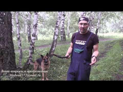 Как приучить собаку к команде голос видео
