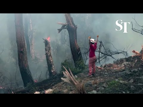 Desperate locals try to put out wildfire in Turkey
