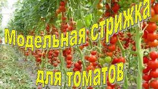 Пасынкование томатов(Что такое пасынкование, как правильно пасынковать, 1. Чтобы получить более ранний, качественный урожай...., 2016-06-08T22:27:10.000Z)