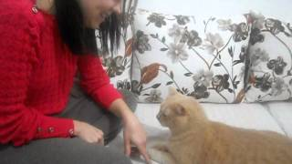 обучение  кота  - training cats