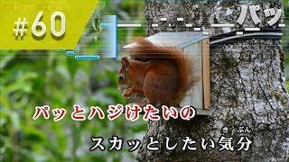 西野カナ「パッ」のカラオケです! 【2017年末リクエスト制作曲】 #60 ...