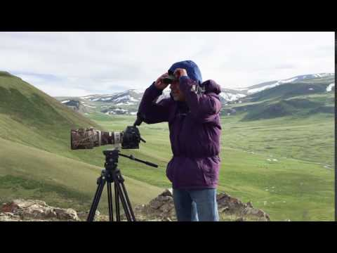Windy day while filming golden eagles in the mountains of western Mongolia