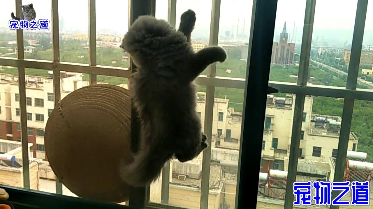 小胖貓發現有飛蟲,興奮得瞬間變身小飛俠,最後的彩蛋讓人驚喜