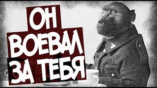 Как Обезьяна Воевала В Первую Мировую Войну?