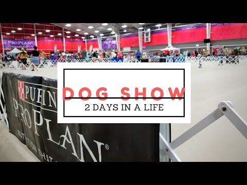 DOG SHOW VLOG WEEKEND 2