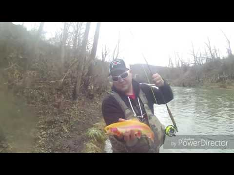Trout Fishing Greene County 12/26/2016