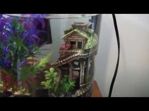 Betta Care 101: How to Raise a Healthy Betta Fish