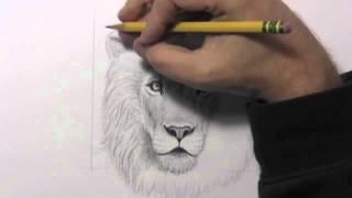 Desenho de um leão realista