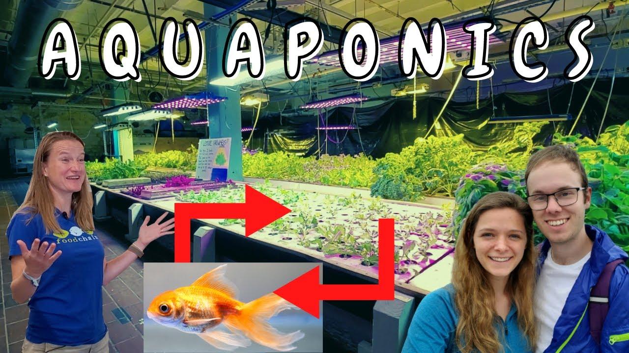 US (KY): A Peek Into The Aquaponic Farm