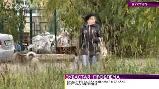 Жителей Вуктыла терроризируют стаи бродячих собак. 1 октября 2014(, 2014-10-01T13:16:45.000Z)