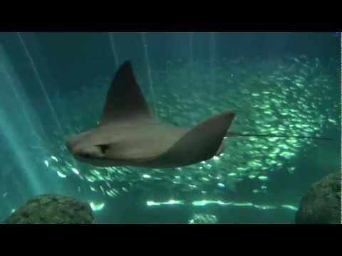 Concierge Pick: Florida Aquarium (Tampa Bay)