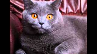 кошки колыбельная