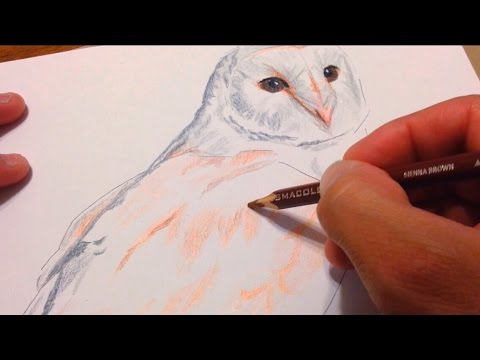How I Draw A Barn Owl Colored Pencils