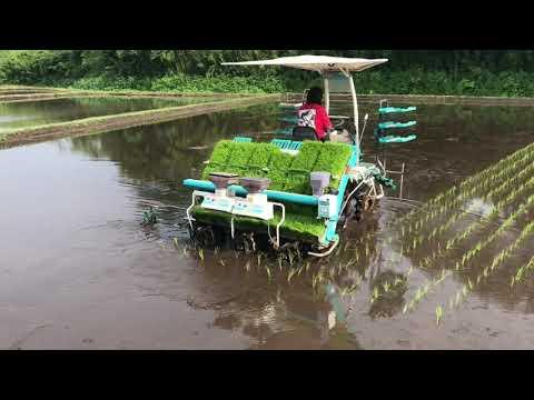 Rice Planting  in Japan