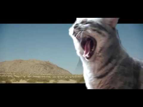 Big Enough Cat (Jimmy Barnes)