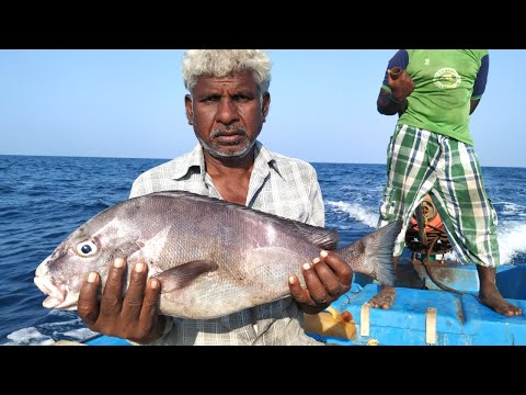 Fish Hunting //handline Fishing At Bay Of Bengal Offshore