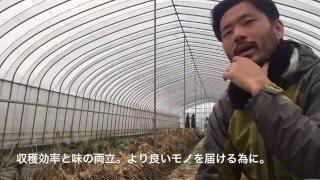 草津市にて無農薬をベースに、人や環境に優しい農業を展開している【や...
