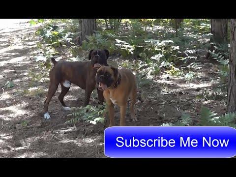 Meme Ein Sehr Fotogener Hund Lustige Bilder Von Tieren