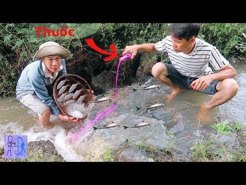 Bắt Hết Cá Trên 1 Con Suối Lớn Bằng 1 Chai Thuốc Màu Đỏ Sting  . Catch Fish