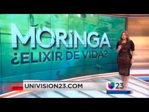 MORINGA ETERNA JUVENTUD Reportaje de Univision y Testimonios de Moringa oleifera