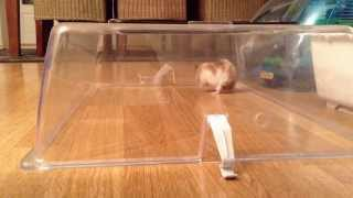 Hamster song with Rulline