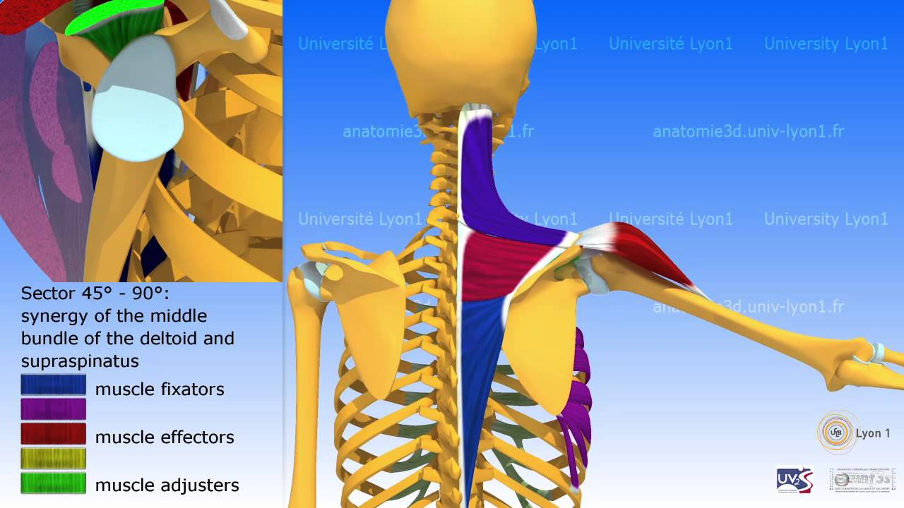 Lateral Elevation Of The Arm In The Plane Of The Scapula Youtube
