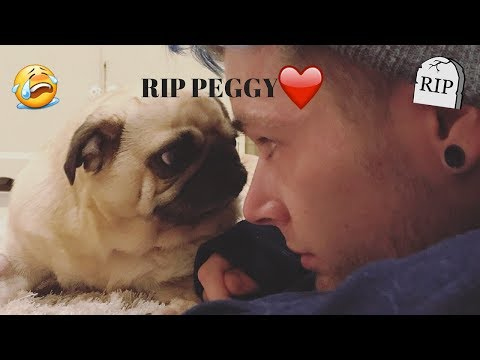 R.I.P Peggy TDM | Tribute To Peggy The Pug | DanTDM