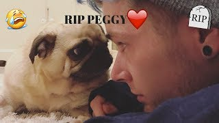 R.I.P Peggy TDM | Tribute To Peggy The Pug | DanTDM