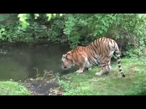 Bronx Zoo, Jul'2016 *60FPS*