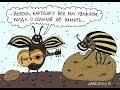 Ой цветет картошка Песня про колорадского жука в современном звучании mp3