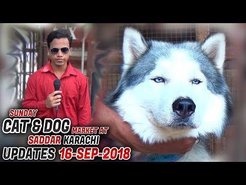 Dog & Cat Market Saddar Karachi Updates 16-9-2018 (Jamshed Asmi Informative Channel) In Urdu/