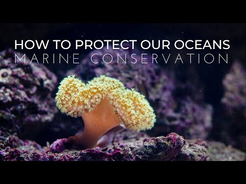 What is Marine Conservation? | How to Protect Our Oceans