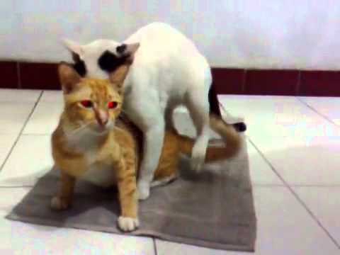 Kucing Kawin Foto Bugil Bokep 2017