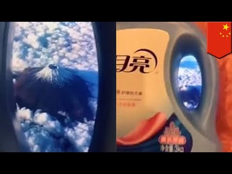 Pura-pura terbang: tren viral Cina yang terbaru - TomoNews